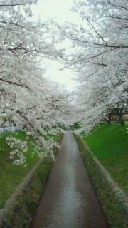 春に想うこと